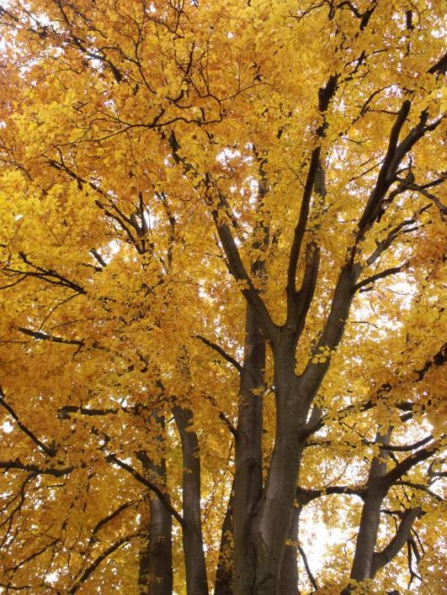 Ash Tree Pioneer Park